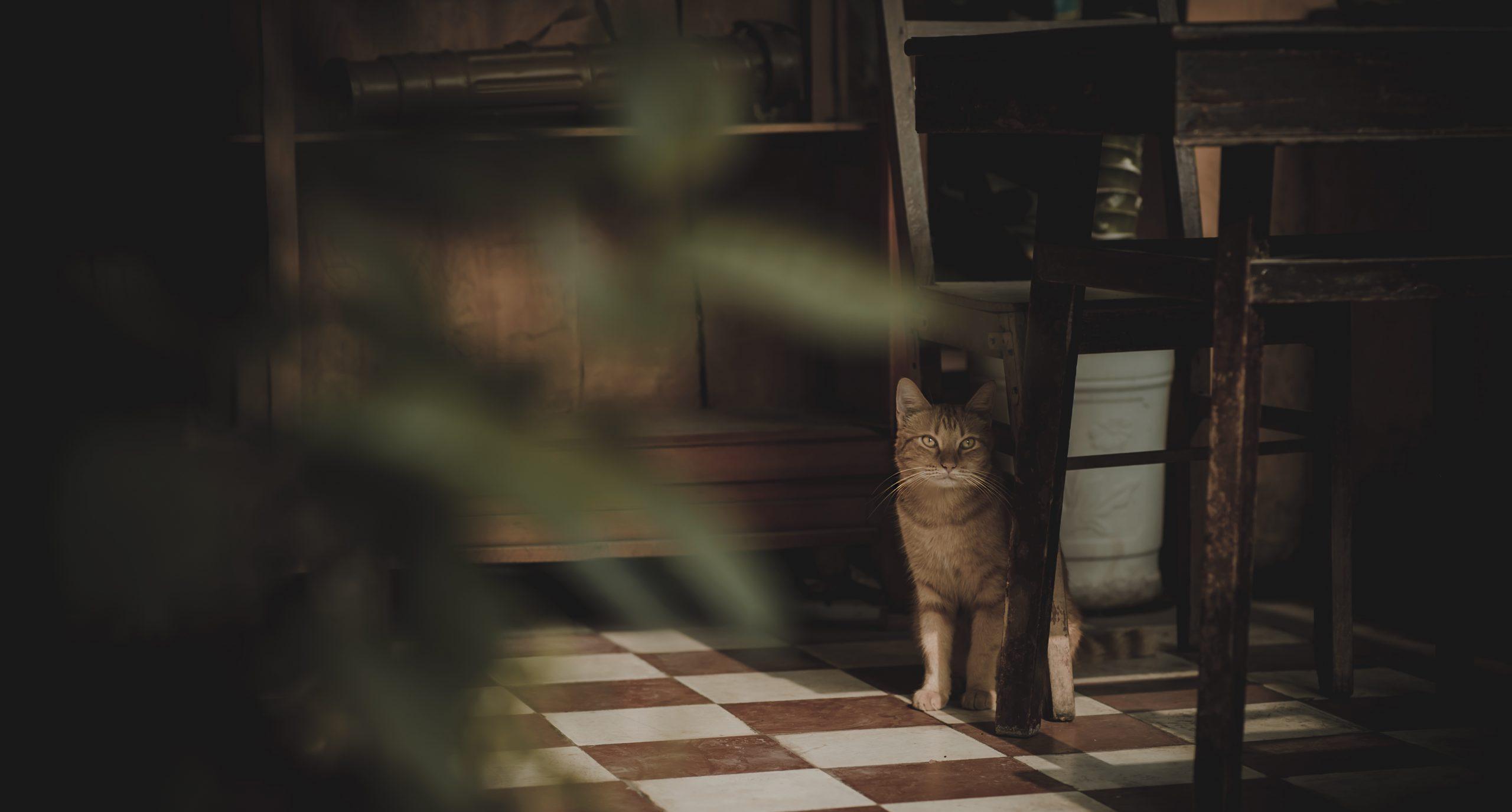lovely cat in the floor