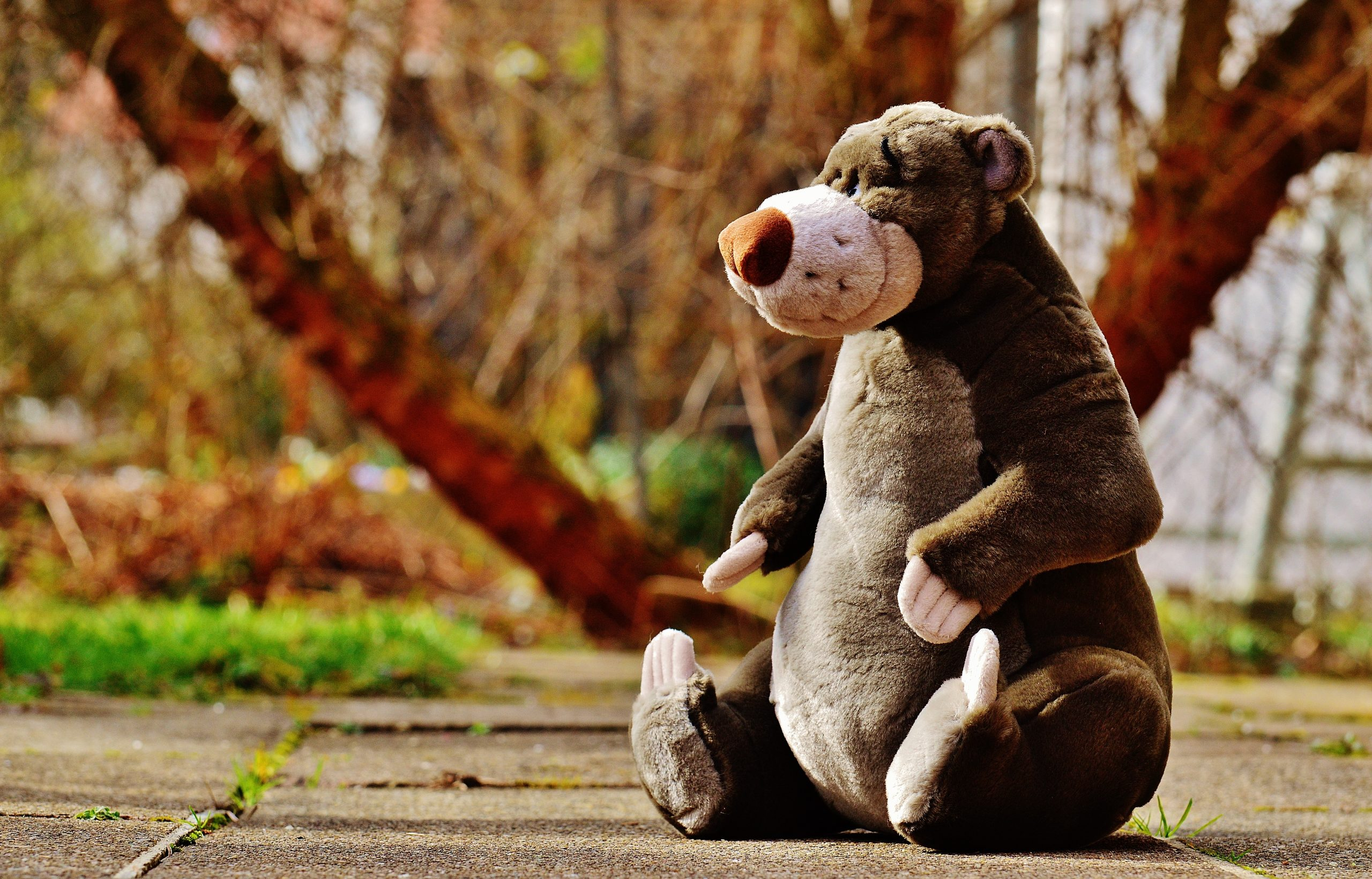 bear cute teddy