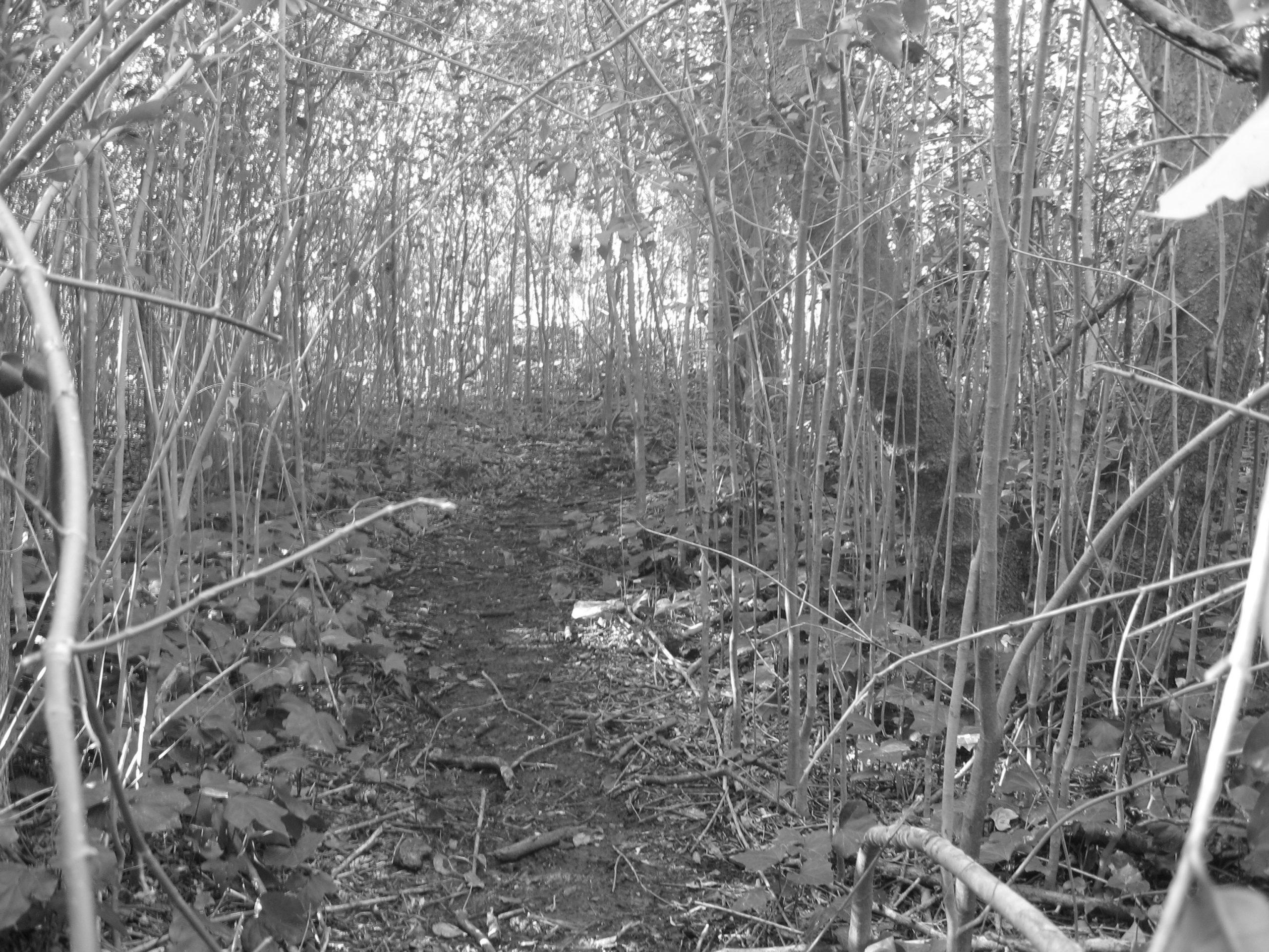 foliage black and white