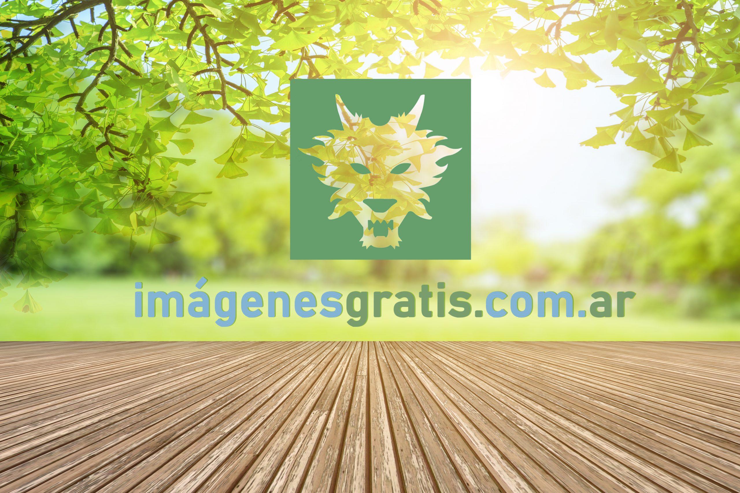 imágenes gratis web