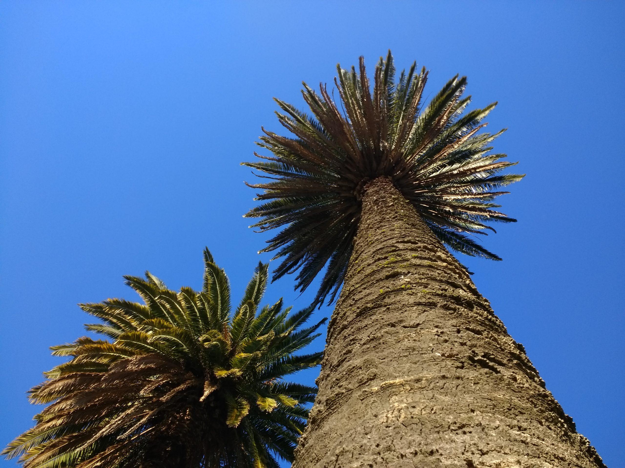 palm tree below