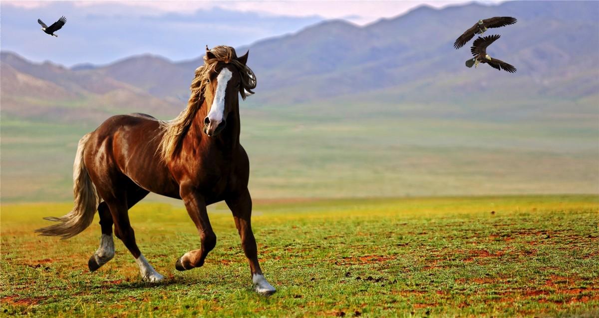 jogging horse