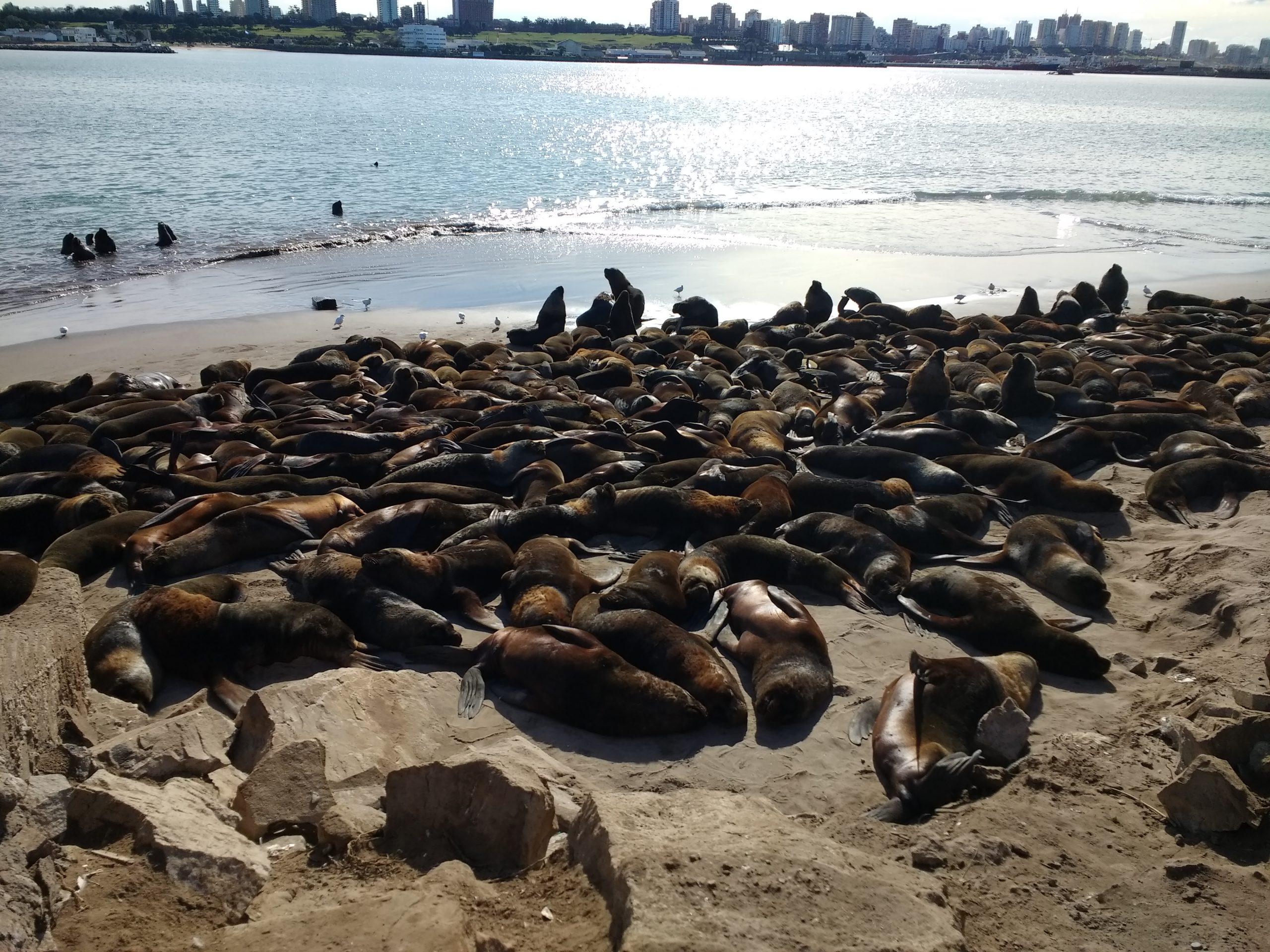 sea lions natural reserve