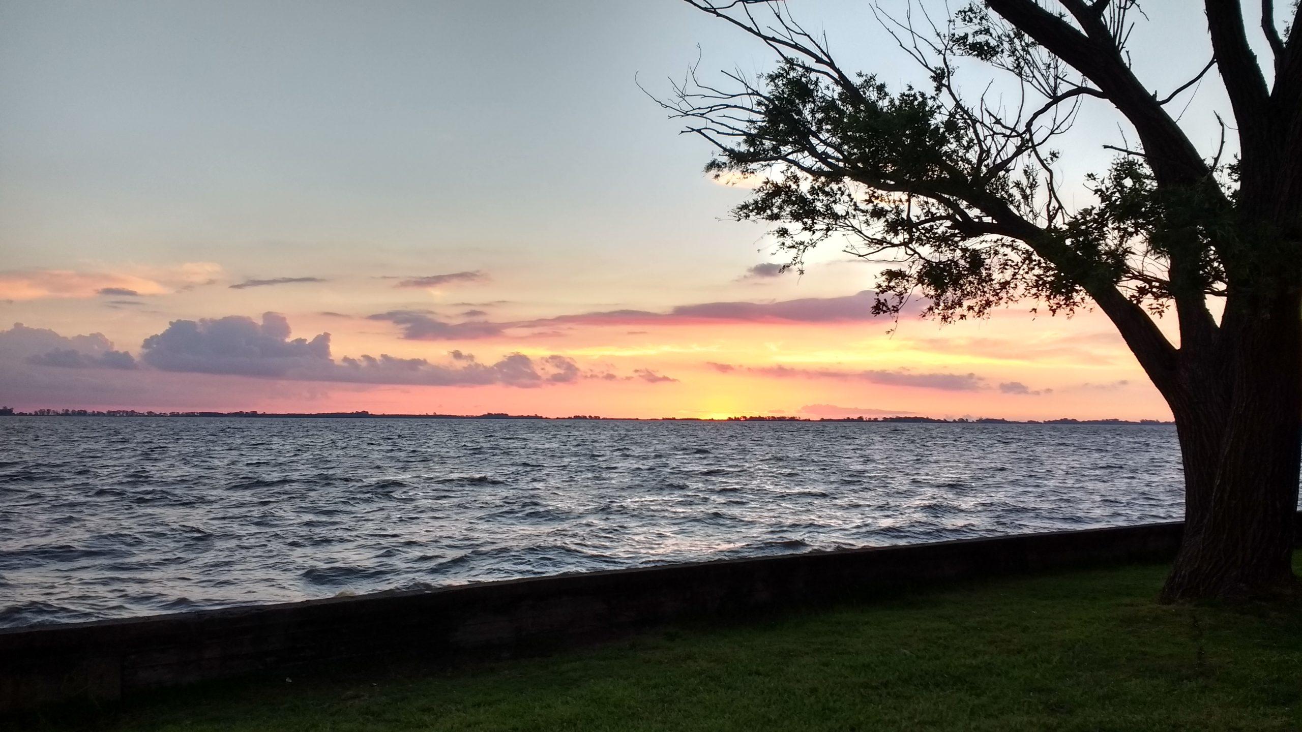 tree lake silhouette