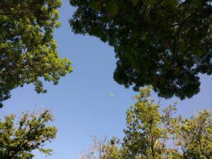 trees figures