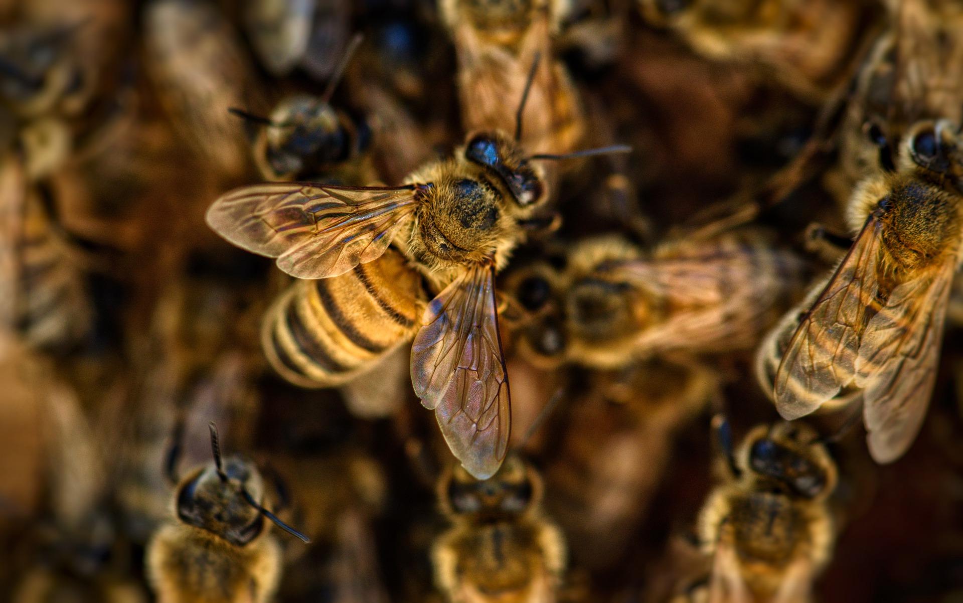 bees 1920x1202 - Free image bank