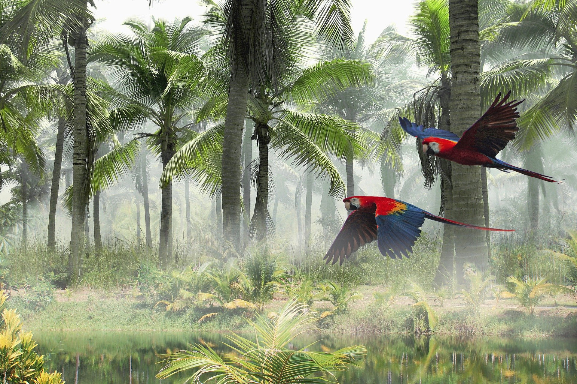 parrots flying 1920x1280 - Free image bank