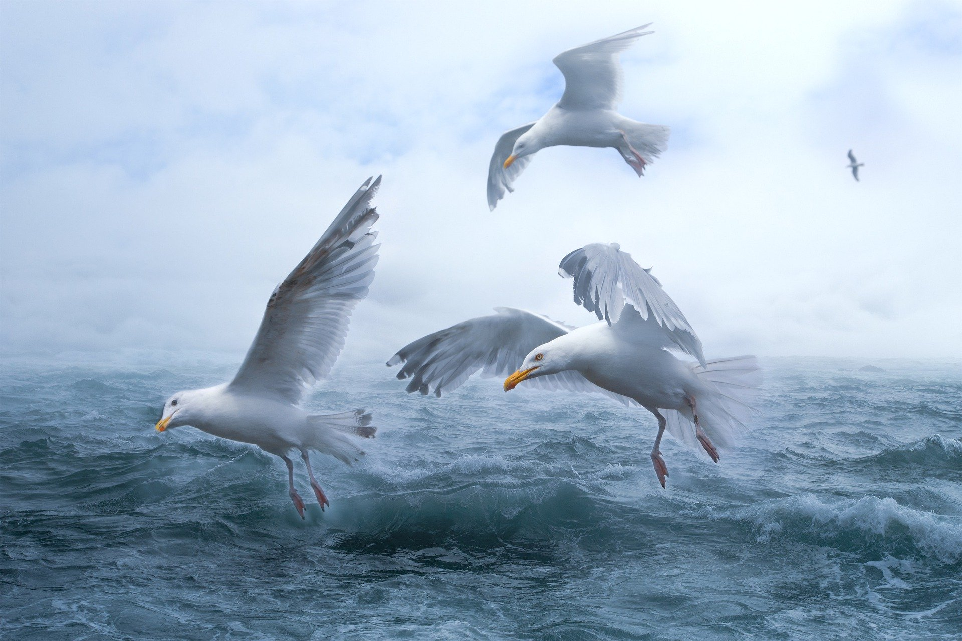 seagulls on the sea 1920x1280 - Free image bank